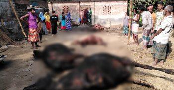 নওগাঁর আত্রাইয়ে বিদ্যুৎ শর্টসার্কিটের আগুনে ৫টি গরু পুরে ছাঁই-আহত ৪ গরু