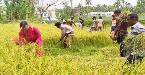 Krishak League is putting a smile on the face of farmers in Khulna
