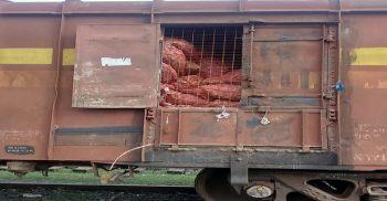 বিশেষ ব্যবস্থায় বেনাপোল রেলপথে আমদানি হলো প্রথম খাদ্যদ্রব্য জাতীয় পণ্য