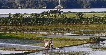 হবিগঞ্জে বন্যার পানি কমতেই বীজতলা তৈরীতে ব্যস্ত কৃষক
